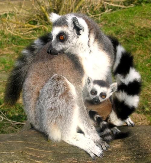 Ystad Zoo